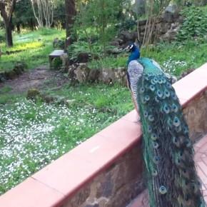 04 - Visiting Villa Vrindavan